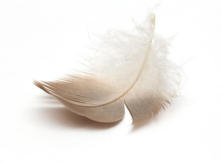 pluma inspiracion que evoluciona
